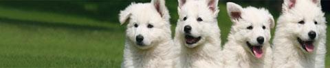 Welpen/Mini-Hunde