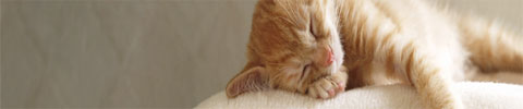Cat Activity