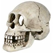 TRIXIE Skelett Schädel Totenkopf 15cm (8713)