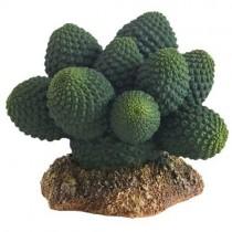 Kaktus Atacama 7 cm