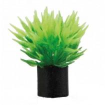 Utricularia mini