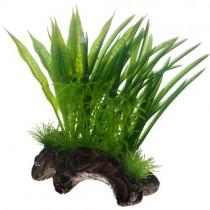 Flora Root S