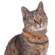 HUNTER USB Leuchtschlauch Yukon Katze 18-34cm orange