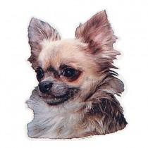 Aufkleber Chihuahua