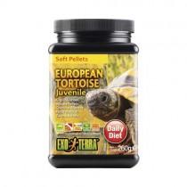 EUROPEAN TORTOISE Juvenile