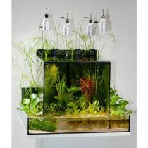 Theiling-Plantorarium