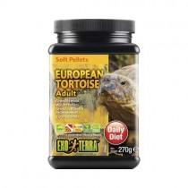 EUROPEAN TORTOISE