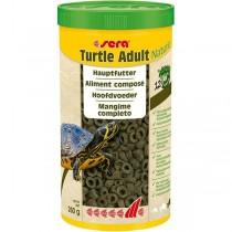 Turtle Adult Nature
