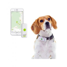 Weenect GPS Tracker Hund