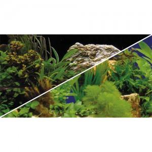Foto-Rückwand Pflanze