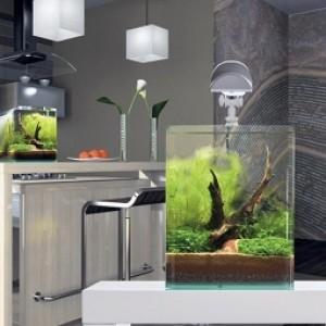 Nano Cube Aquarien