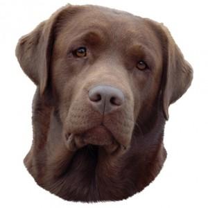 Trixie Aufkleber Labrador braun (Restbestand)