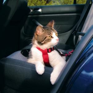 Auto Sicherheitsgeschirr Katze
