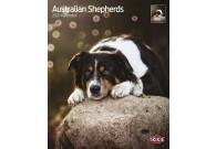 Australian Spepherd